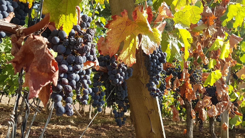 vignes-saint-emilion-1-jour-a