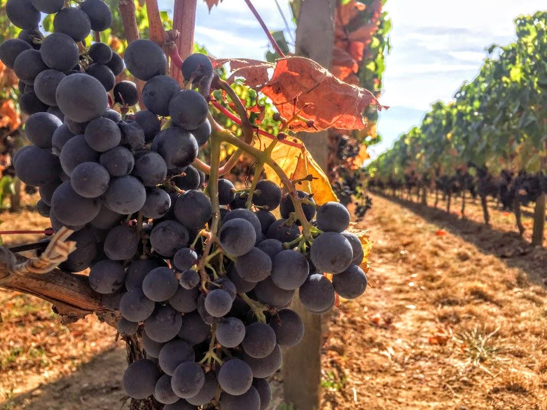 vignes-saint-emilion-1-jour-a.jpg
